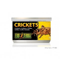 Crickets (Grilli) 34Gr