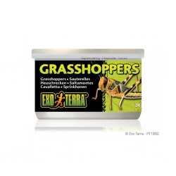 Grasshoppers (Cavallette) 34g